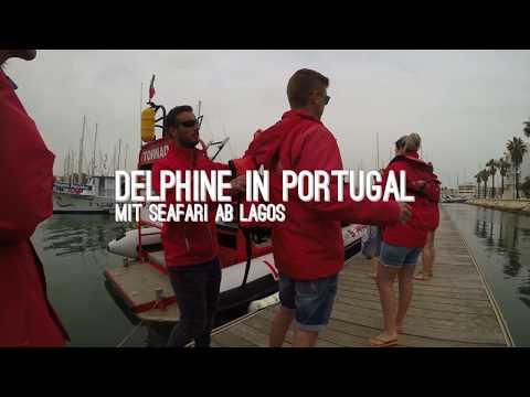 TIPP: Delfin Tour Lagos - Algarve Portugal