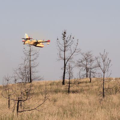 Abgebrannter Wald in Nordportugal