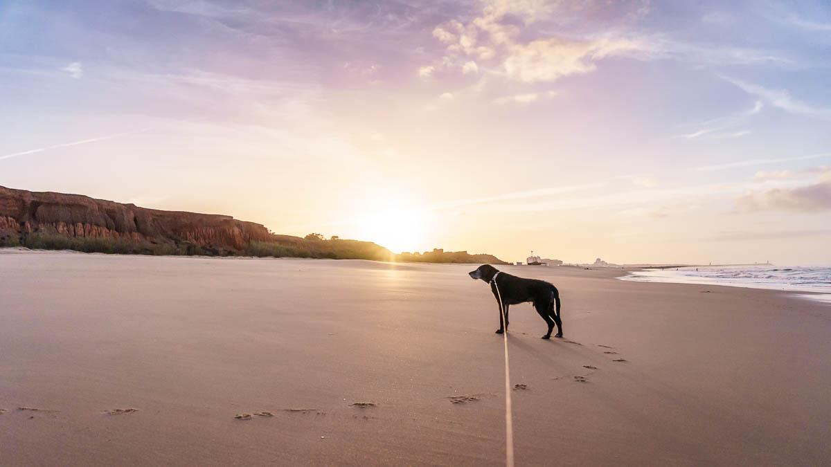 Strand Algarve Praia da Falesia