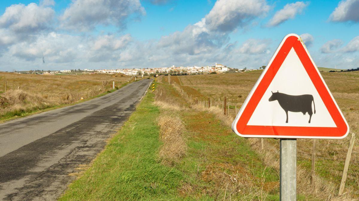 Autofahren in Portugal – Freud und Leid auf portugiesischen Straßen