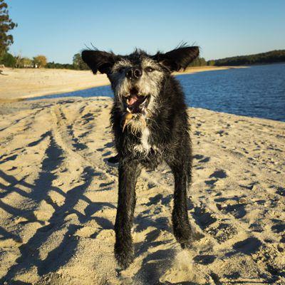 Hunde am See