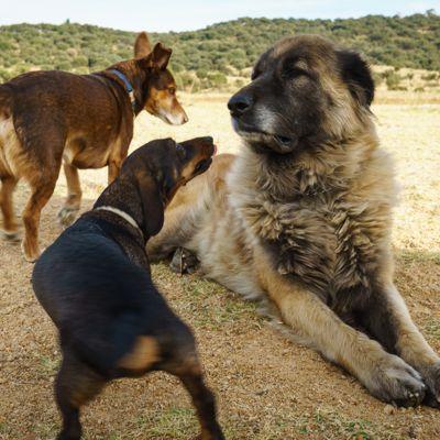 sozialisierte Hunde