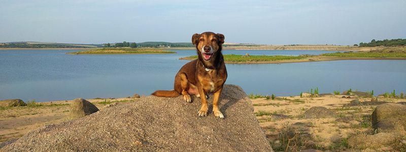 Hundeurlaub Portugal