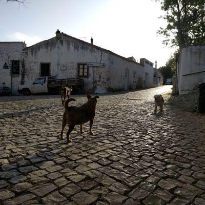 portugiesische Hunde