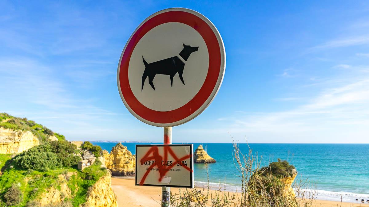 Algarve Strand Hund