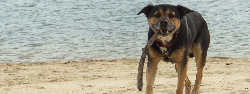 Urlaub mit Hund in Portugal