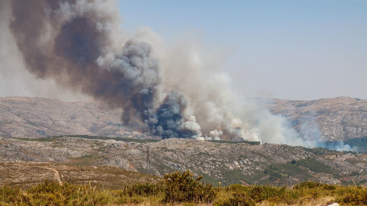 Waldbrände in Portugal | Ursachen + Folgen