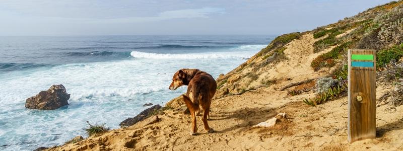 Wandern mit Hund Fischerweg Portugal