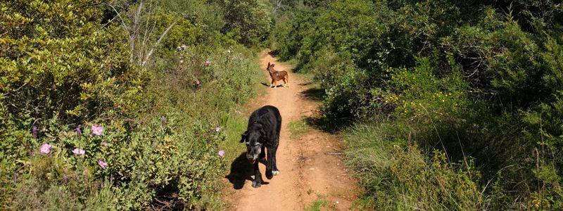 Wandern mit Hund in Portugal